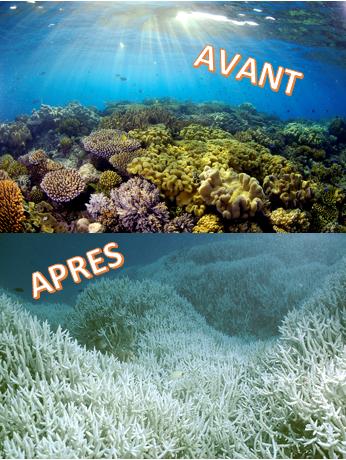 La grande barri re de corail en danger lyc e jean jaur s - Dioxyde de carbone danger ...